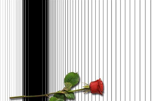 Card, Paper, Greeting Card, Red Rose