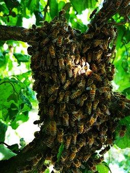 Bees, Hive, Beekeeper, Honey Bees