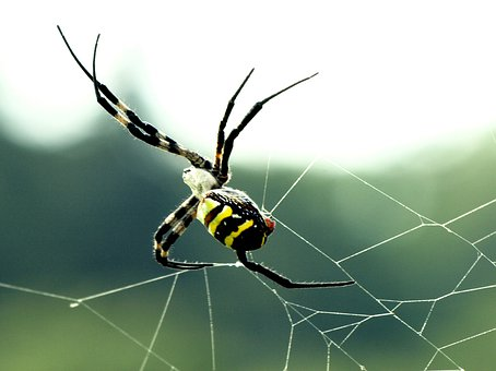 Natural, Creatures, Insect, Spider
