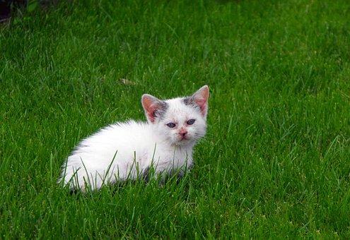 Cat, Tomcat, Kitten