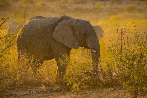 Namibia, Sunset, Elephant, Animal, Travel, Africa