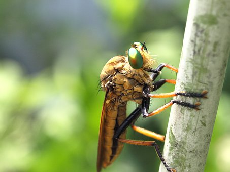 Natural, Creatures, Insect, Abu, Eyes, Compound Eyes