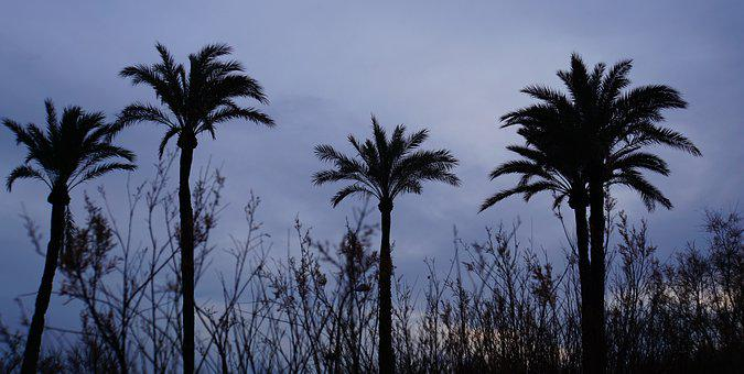 Palm Trees, Grasses, Island, Mallorca