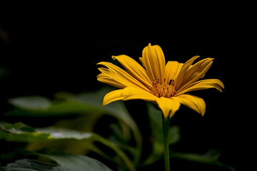 Flower, Flowers, Spring, Nature, Plant
