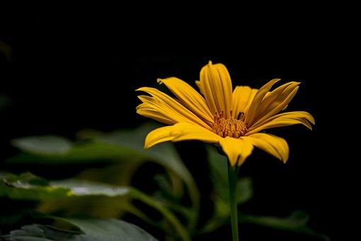 Flower, Flowers, Spring, Nature, Plant, Garden, Leaves
