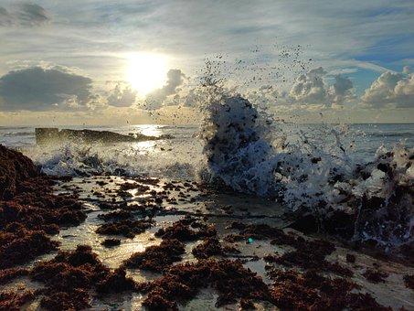 Sea, Beach, Seaweeds, Tides, And Lows, Israel, Nahariya
