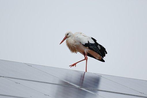 Stork, Bird, Bill, Rattle Stork, Feather, Plumage