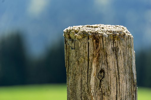 Wood, Pile, Close Up, Summer, Pasture Fence, Post
