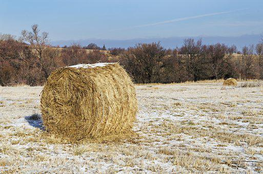 Hay Bale, Winter, Snow, Round Bale, Meadow, Landscape