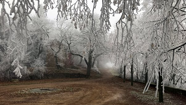Frost, Trees, Winter, Wintry, Nature, Frozen, Cold