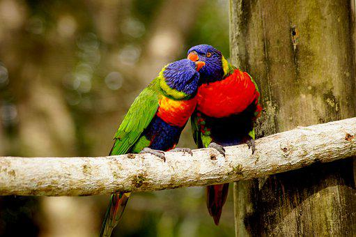 Parrot, Couple, Branch, Colorful, Nature, Color