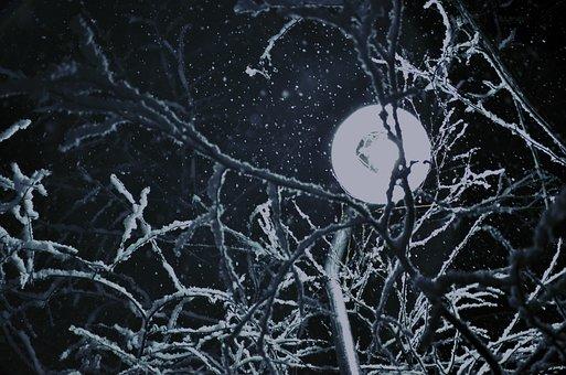 Night, Snow, Road Light, Nature, Winter, Dark, Trees