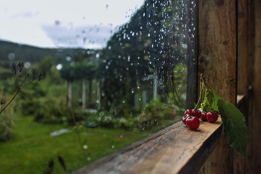 Window, Rain, Glass, Water, Rainy, Drops