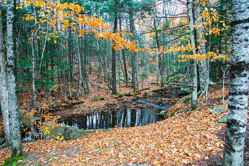 Flume Gorge Park, New Hampshire, Fall, Woods