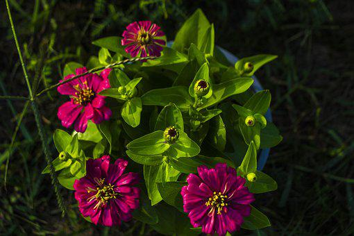 Pink, Purple, Green, Bloom, Floral, Lilac, Garden, Rose