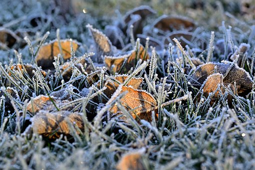Hoarfrost, Grass, Frost, Nature, Cold
