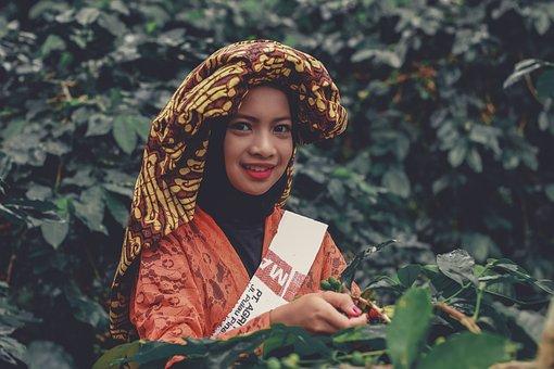Coffee, Harvest, Plantation, Indonesia, Kartini, Raw