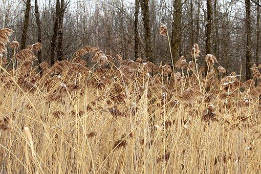 Winter, Snow, Tall Grass, Landscape, Cold, Nature