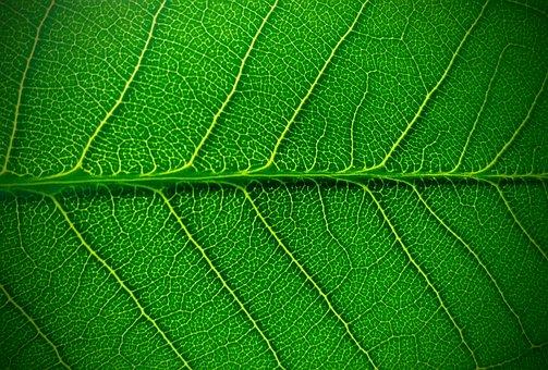 Summer, Green, Leaf, Nature, Cells