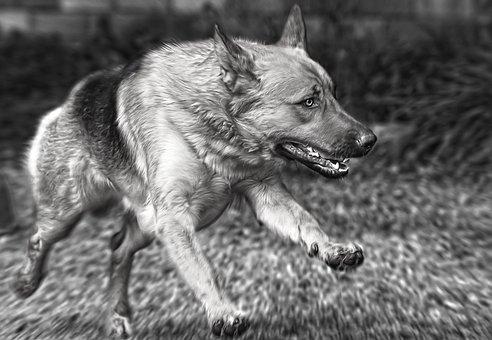 Dog, Run, Animal, Pet, Fun, Play