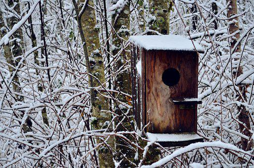 Bird House, Snow, Winter, Nature, Cold