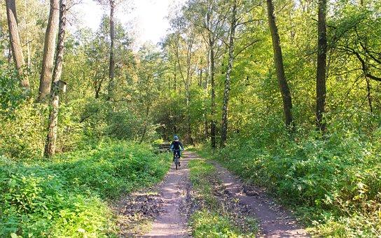 Landscape, Forest, Autumn, Nature, Trees, Plants