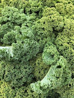 Kale, Winter, Kohl, Food, Leaves, Healthy, Winter Food