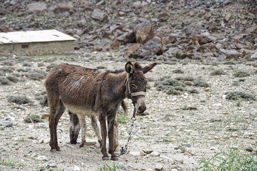 Donkey, Animal, Mammal, Landscape, Karg