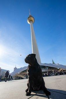 Telespargel, Dog, Tv Tower, Berlin, Bulldog, Pug, Alex