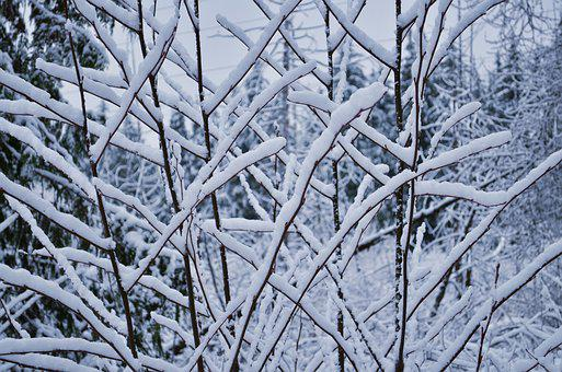 Snow, Cold, Winter, Tree, Branches, Christmas, Ice