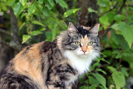 Cat, Predator, Beast, Eyes, Hunting, Nature, View