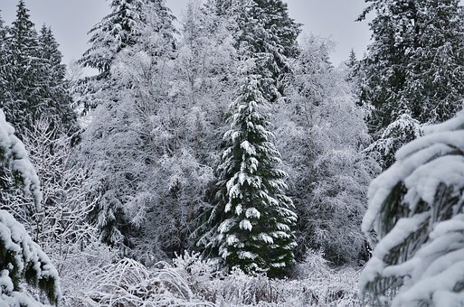 Snow, Forest, Trees, Winter, Cold