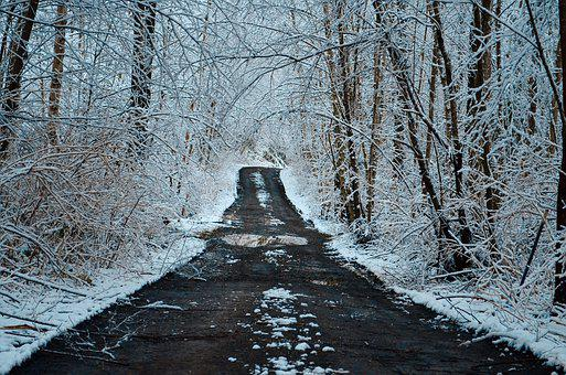Road, Snow, Forest, Woods, Trees, Cold, Snowy, Driveway