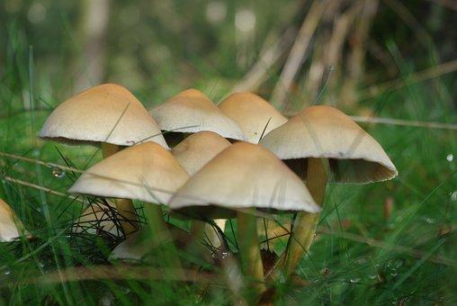 Mushroom, Forest, Toxic, Nature, Autumn, Moss