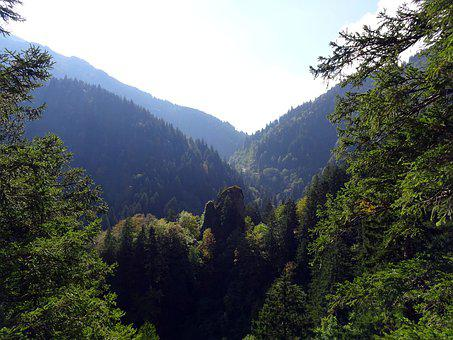 Mountains, Trees, Forest, Landscape