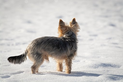 Dog, Snow, Winter, Out, Free, Spout