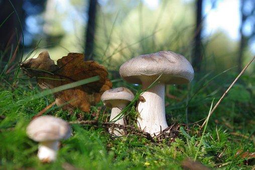 Mushroom, Forest, Toxic, Nature, Autumn