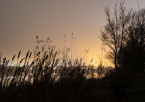 Mist, Sunrise, Riverbank, River Grass
