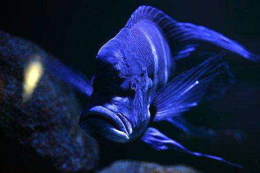 Fish, Sea Animal, Exotic