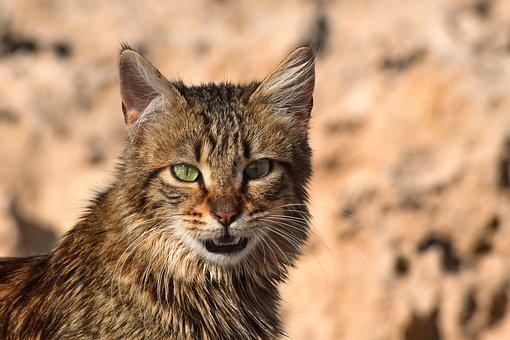 Cat, Stray, Animal, Staring, Portrait, Homeless