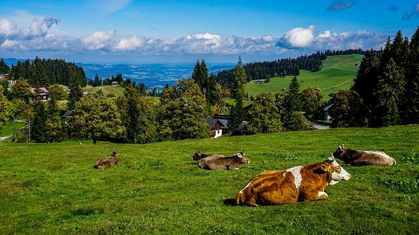 Alm, Landscape, Austria, Mountain, Hill, Cows, Summer