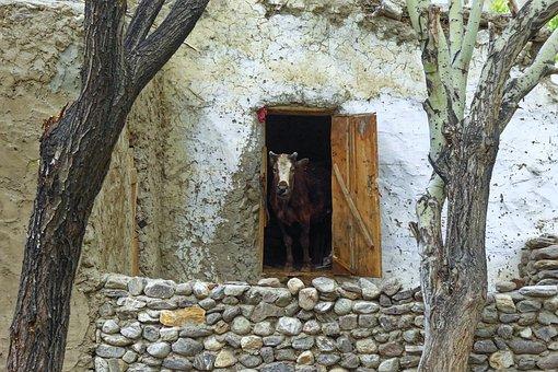 Tajikistan, Vrang, Village, Building, House, Stall, Cow