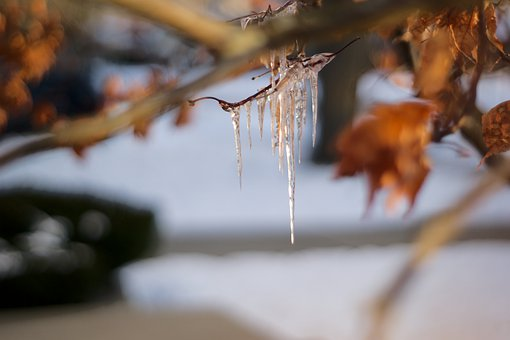 Ice, Icicles, Frozen, Icy, Tree, Leaves, Winter, Fall