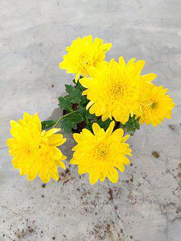 Flowers, Yellow Flowers, Plant, Beautiful, Yellow, Cute
