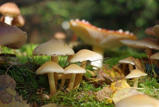 Mushrooms, Toxic, Forest, Family, Macro, Close Up