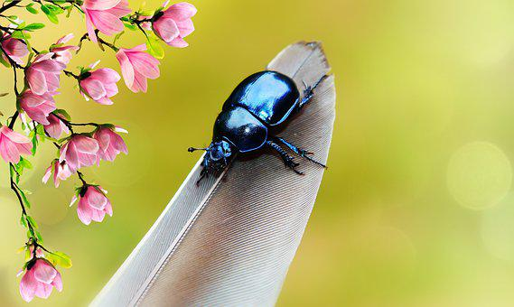 Forest Beetle, The Beetle, The Feather Of A Bird