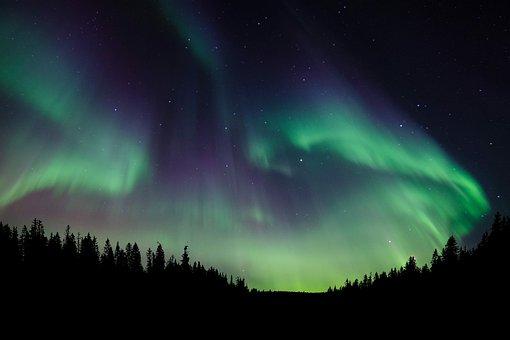 Nature, Forest, Night, Sky, Northern Lights, Light