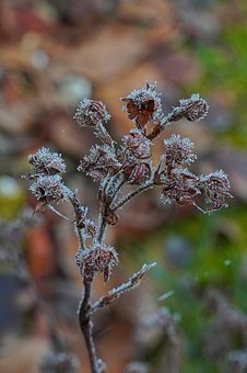 Branch, Frost, Frosty, Morning