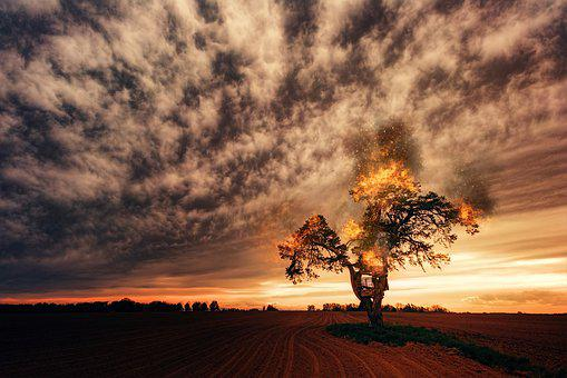 Tree, Clouds, Fire, Landscape, Nature