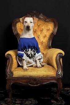 Dog, Animal, Laying, Hunting, Human, Cute, Portrait